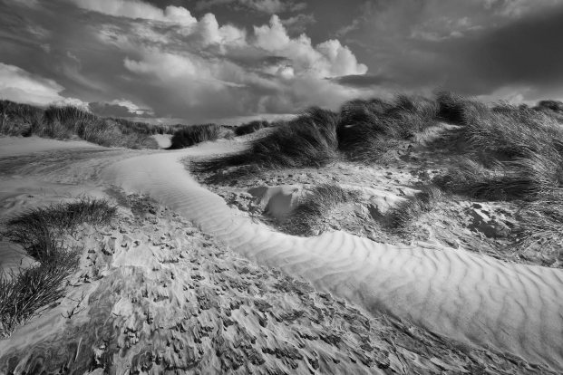 Windswept dunes