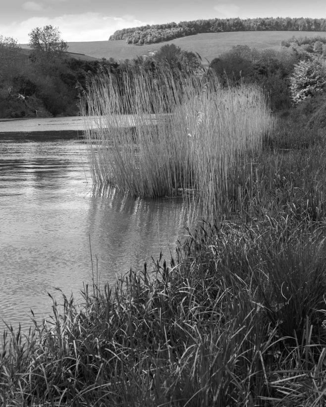 River Arun at South Stoke