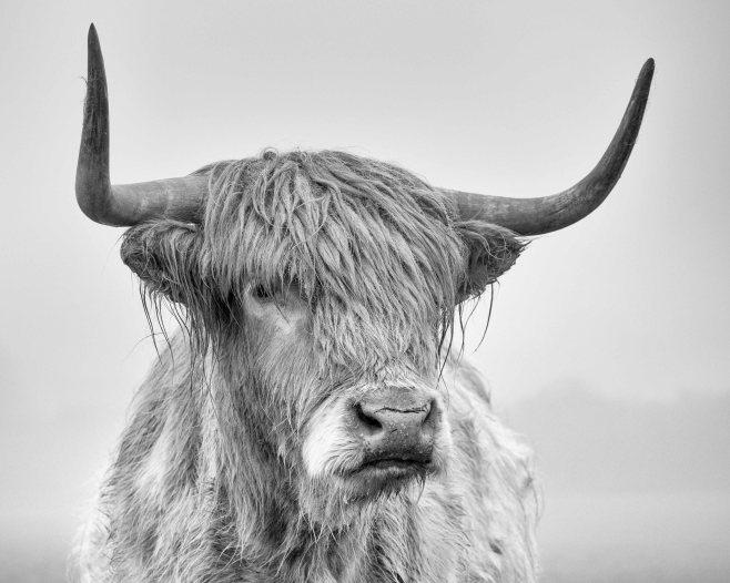 Highland portrait