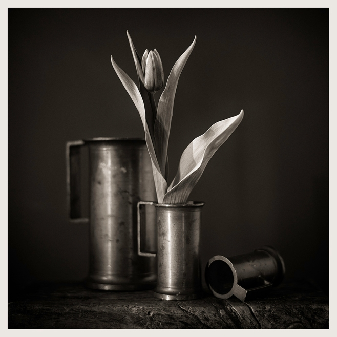 Three vessels and a tulip