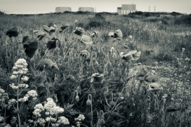 Dungeness-17