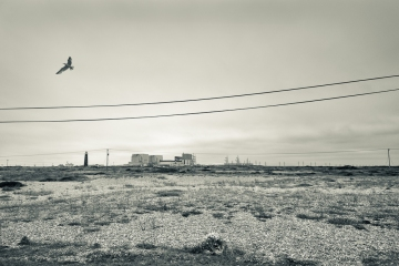 Dungeness-18
