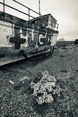Dungeness-6