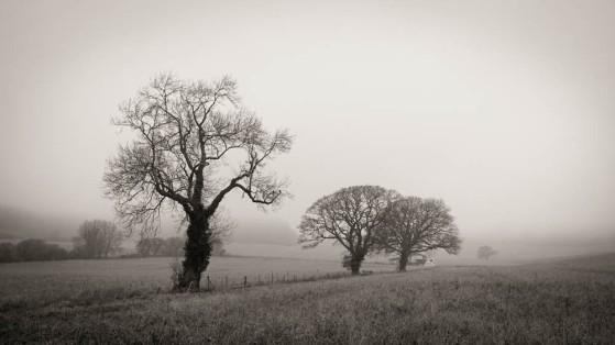 winter-trees-2